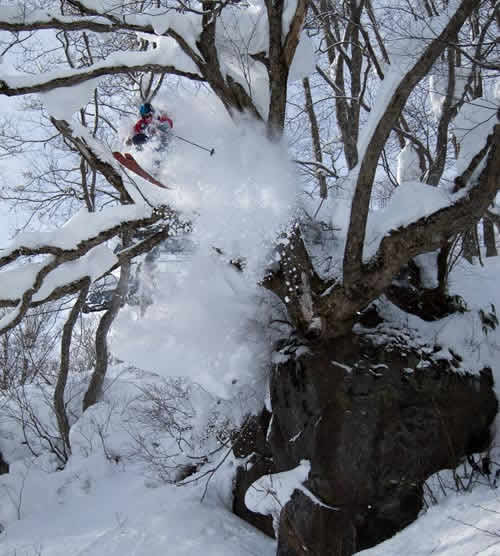 Akakura powder snow and trees - Myoko Reviews